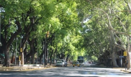 Mendoza ciudad de las árboles.